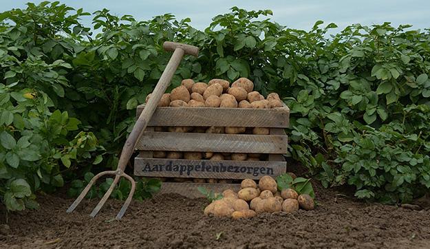 Aardappelen Categorie